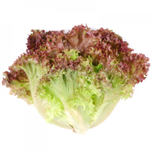 Red Leaf Lettuce at Harvest Barn Country Markets