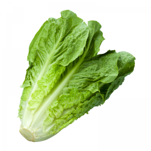 Romaine Lettuce at Harvest Barn Country Markets